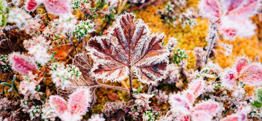 Время заморозков: прогноз на выходные 29-30 сентября