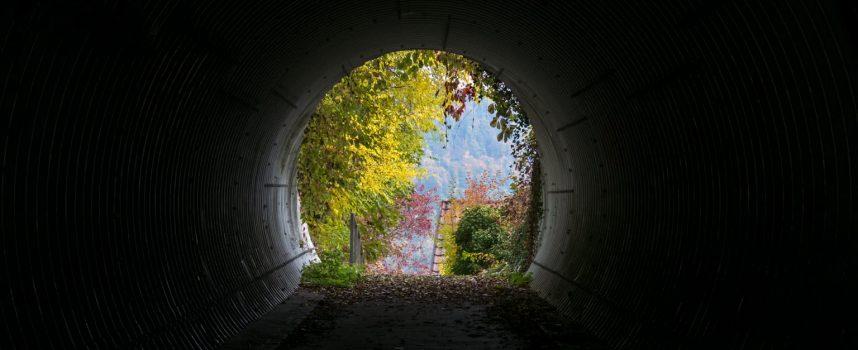 Курс духовной трансформации. Ступень 1 — с 1 ноября