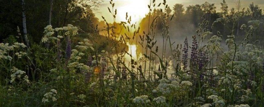 Очищение травами в Северной традиции