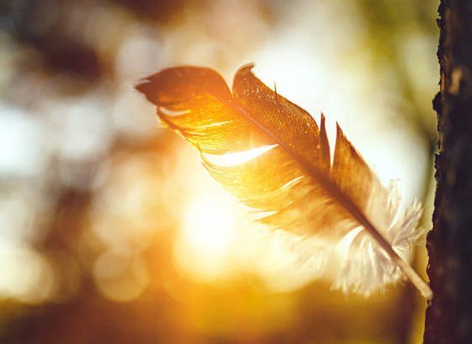 Заговор на птичье перо — на удачу