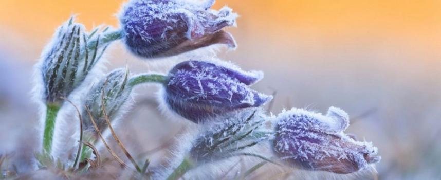 Время последних заморозков: прогноз на неделю 1-7 апреля