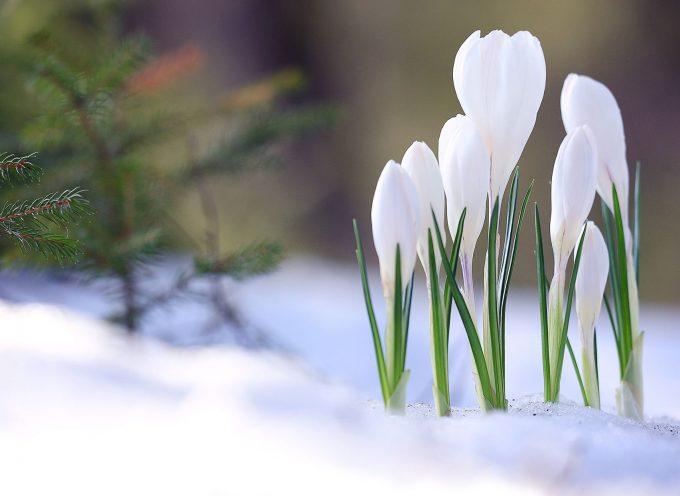 Пробуждение и надежда: энергии и события недели и каждого дня с 1 по 7 февраля