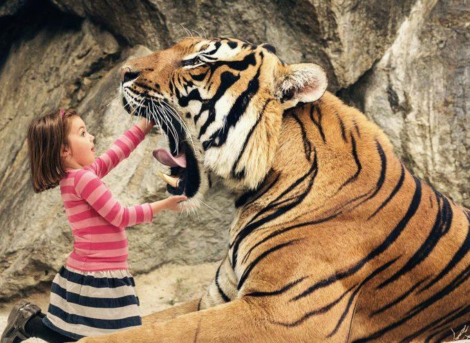 Игра с тигром: прогноз на неделю 15-21 февраля по сферам